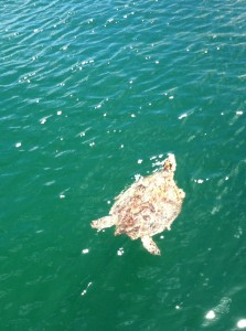 This is one of our marina neighbors, saw it today as we went for a walk